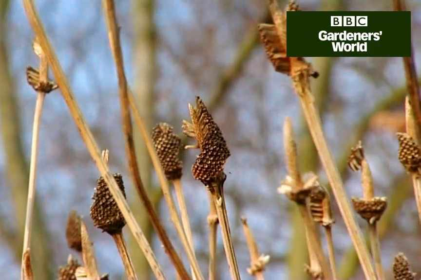 How to lift and divide herbaceous perennials video