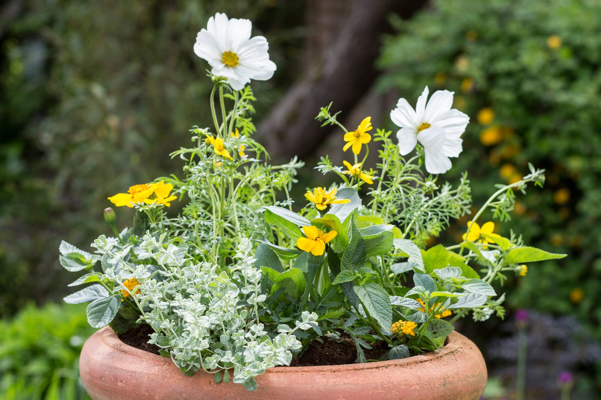 Gardeners World & Top 10 plants for containers - BBC Gardeners\u0027 World Magazine