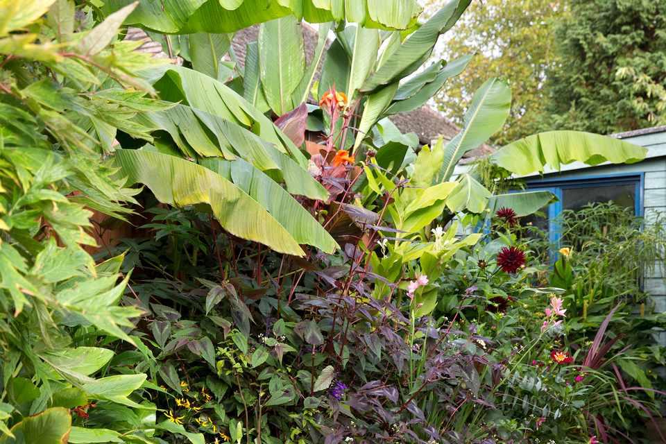 A border of striking foliage, including elephant ears