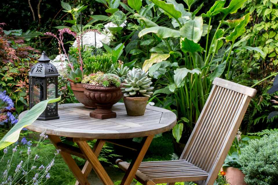 Top plants for patios