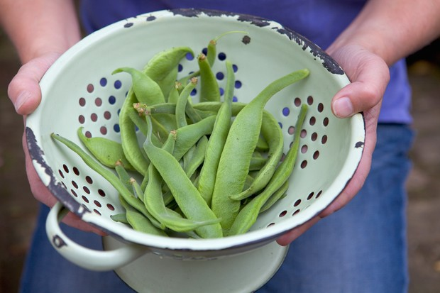 A colander of fresh runner beans