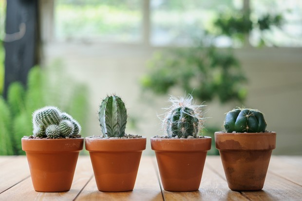 Moving Houseplants Outdoors in Summer - BBC Gardeners' World Magazine