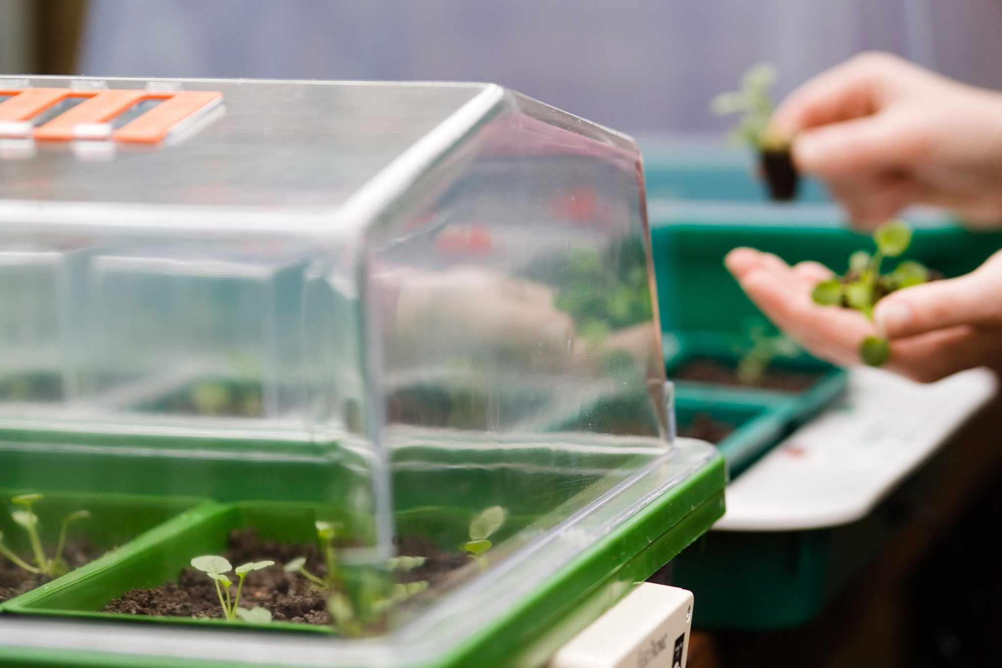 Propagator in a greenhouse