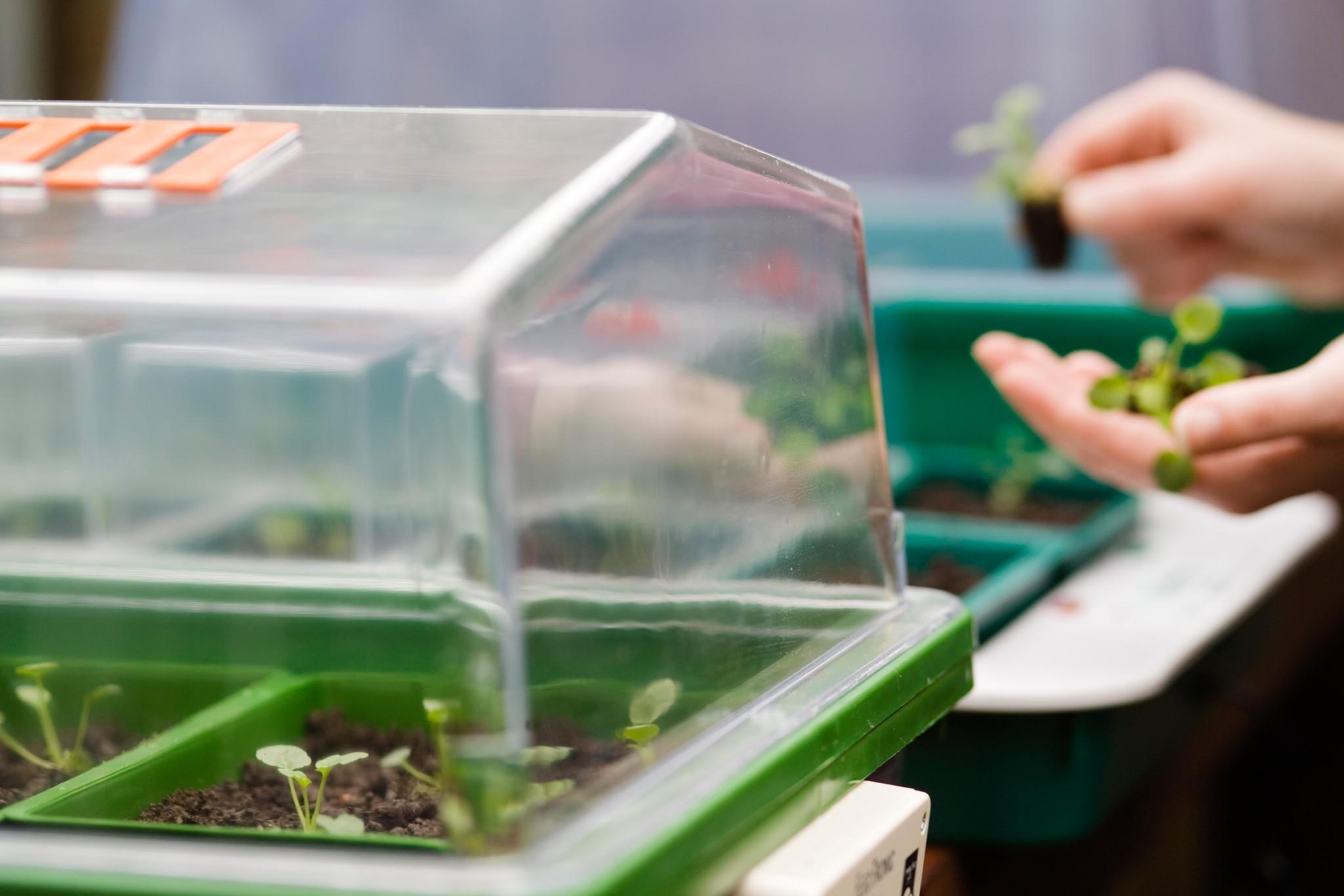 Propagator in a greenhouse