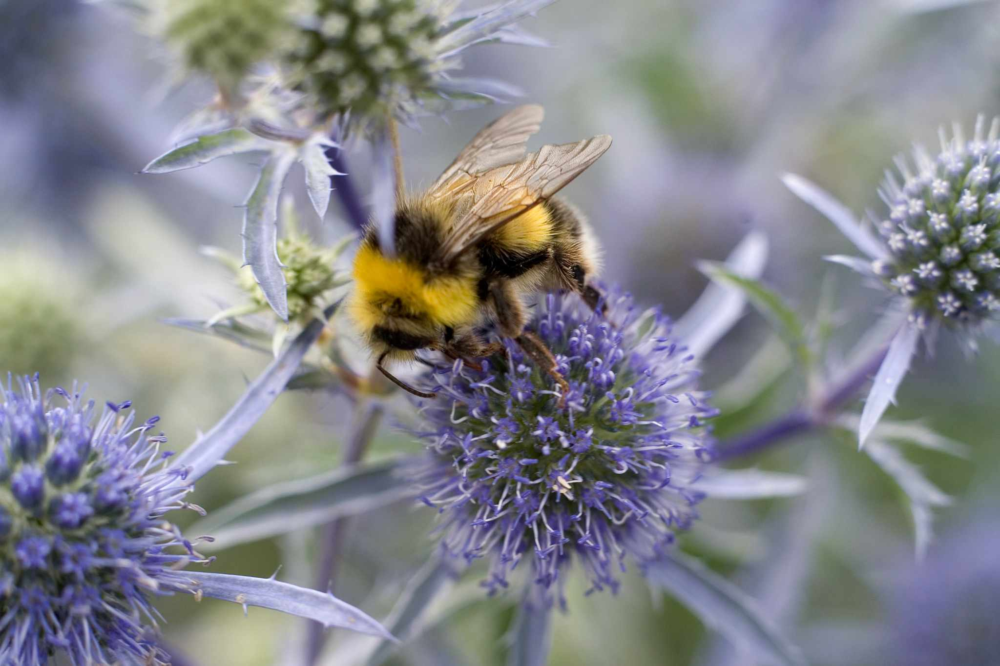Best Plants For Bees