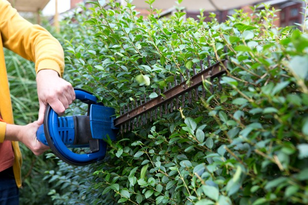 trimming-a-privet-hedge-2