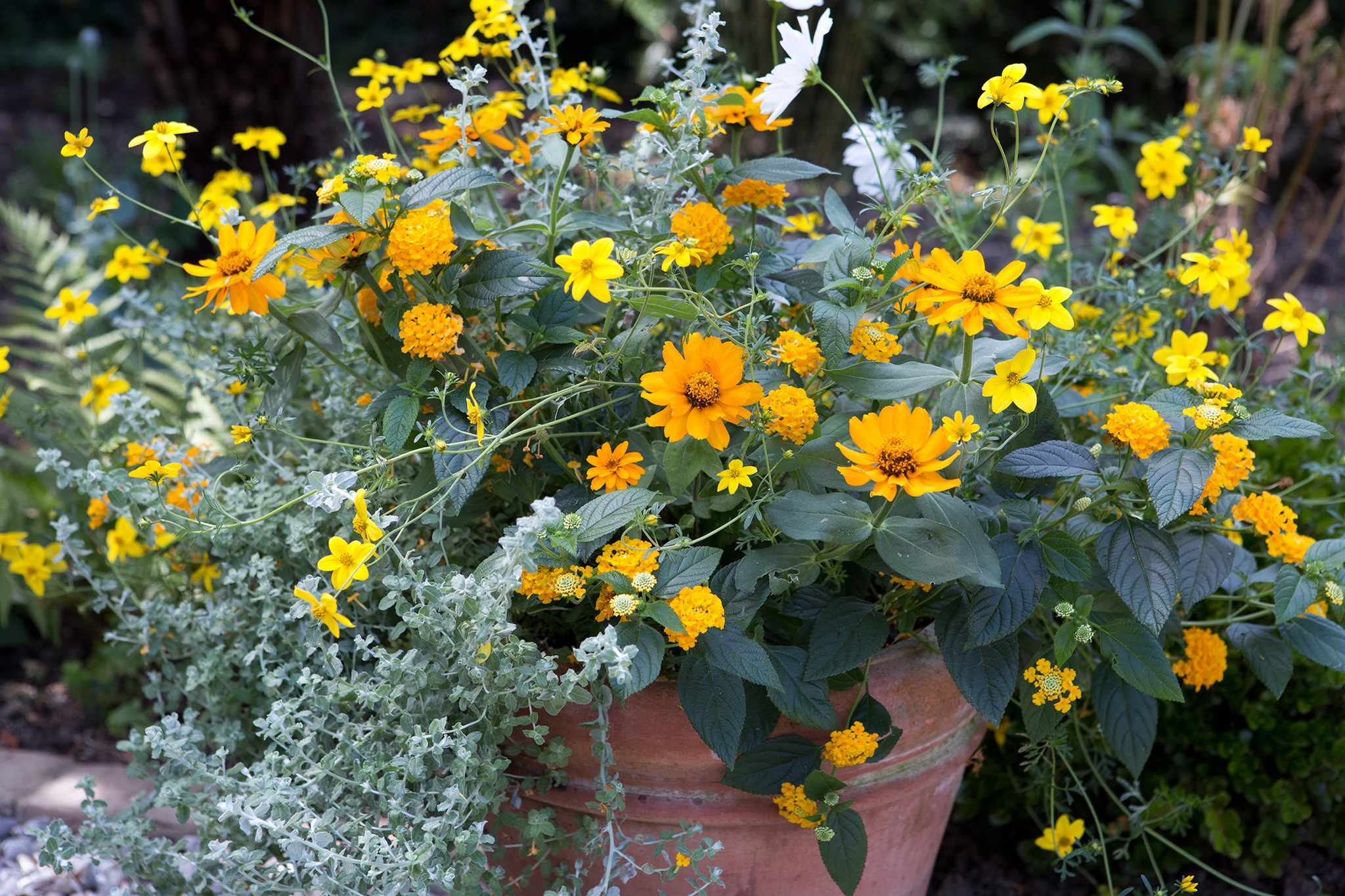 Three Pots for Summer Colour