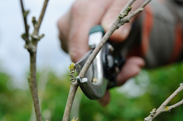 How to prune your plants - pruning at an angle