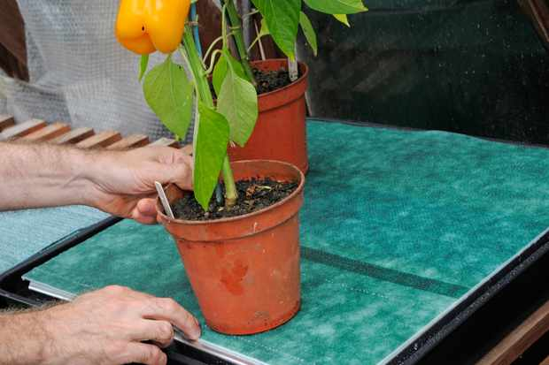 How to set up a self-watering system