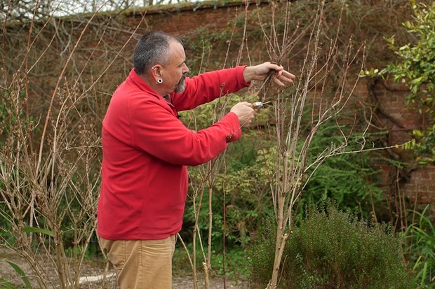 Pruning spring-flowering shrubs