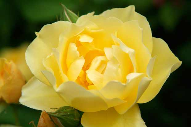 rosa-graham-thomas-4