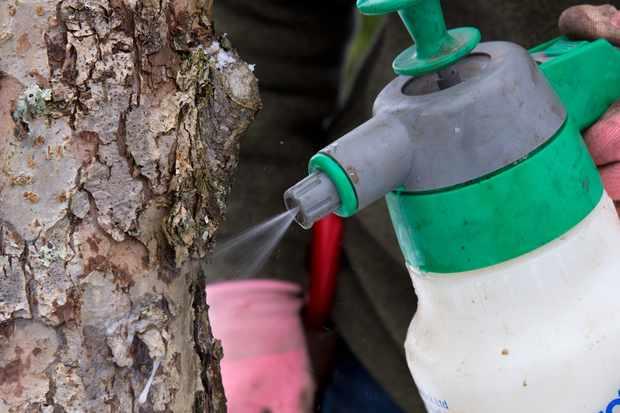 spraying-the-winter-wash-3