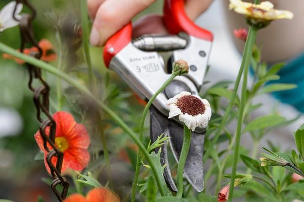 deadheading-fading-flowers