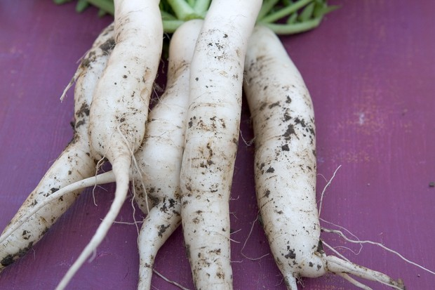 Winter radishes