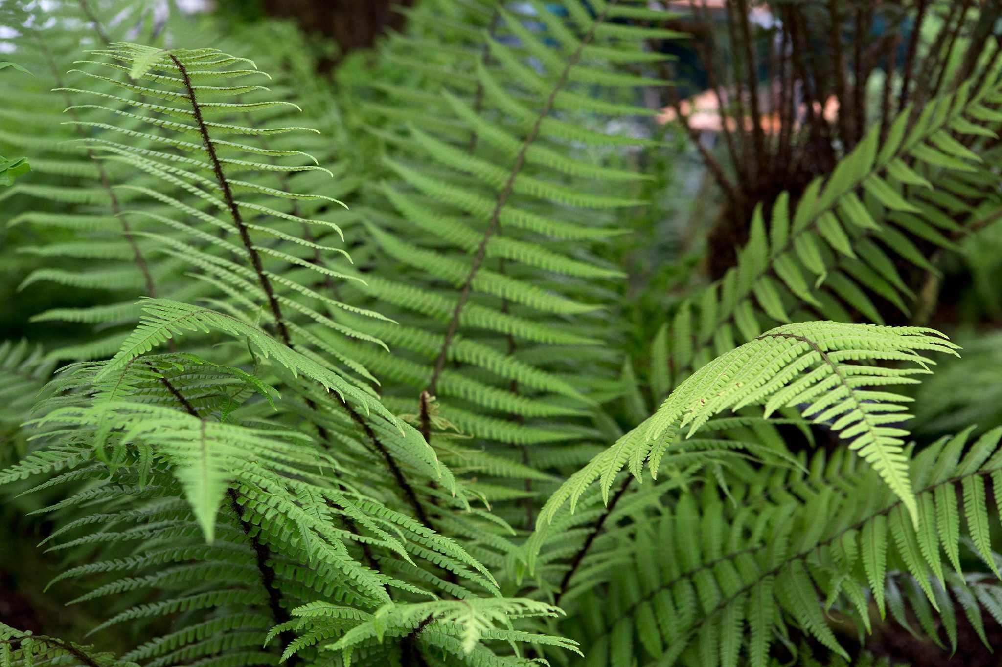 Grow guide - ferns