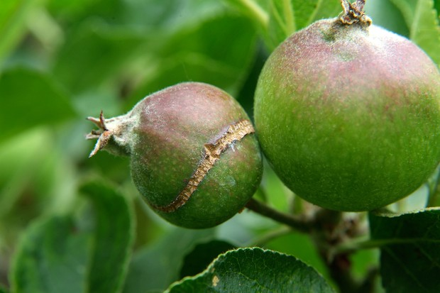crack-on-apple-2