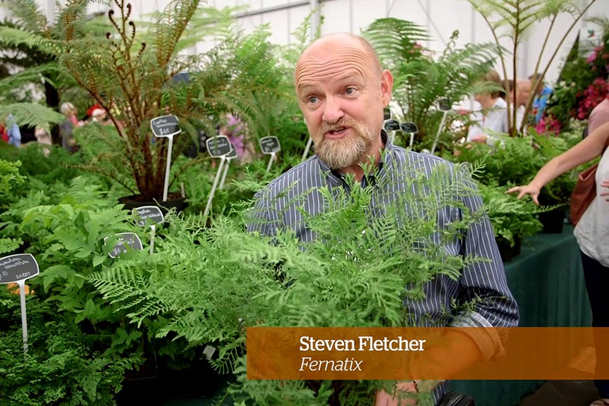 Caring for ferns Golden Rules