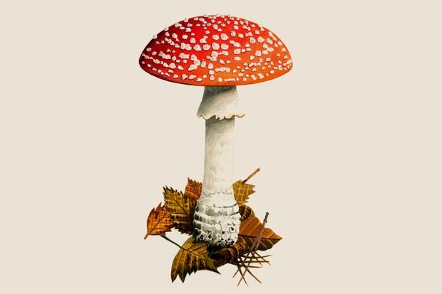 Garden Mushroom Identifier