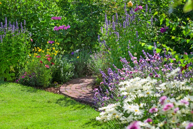 garden-path-with-agastache-lavender-cosmos-echinacea-planting-3