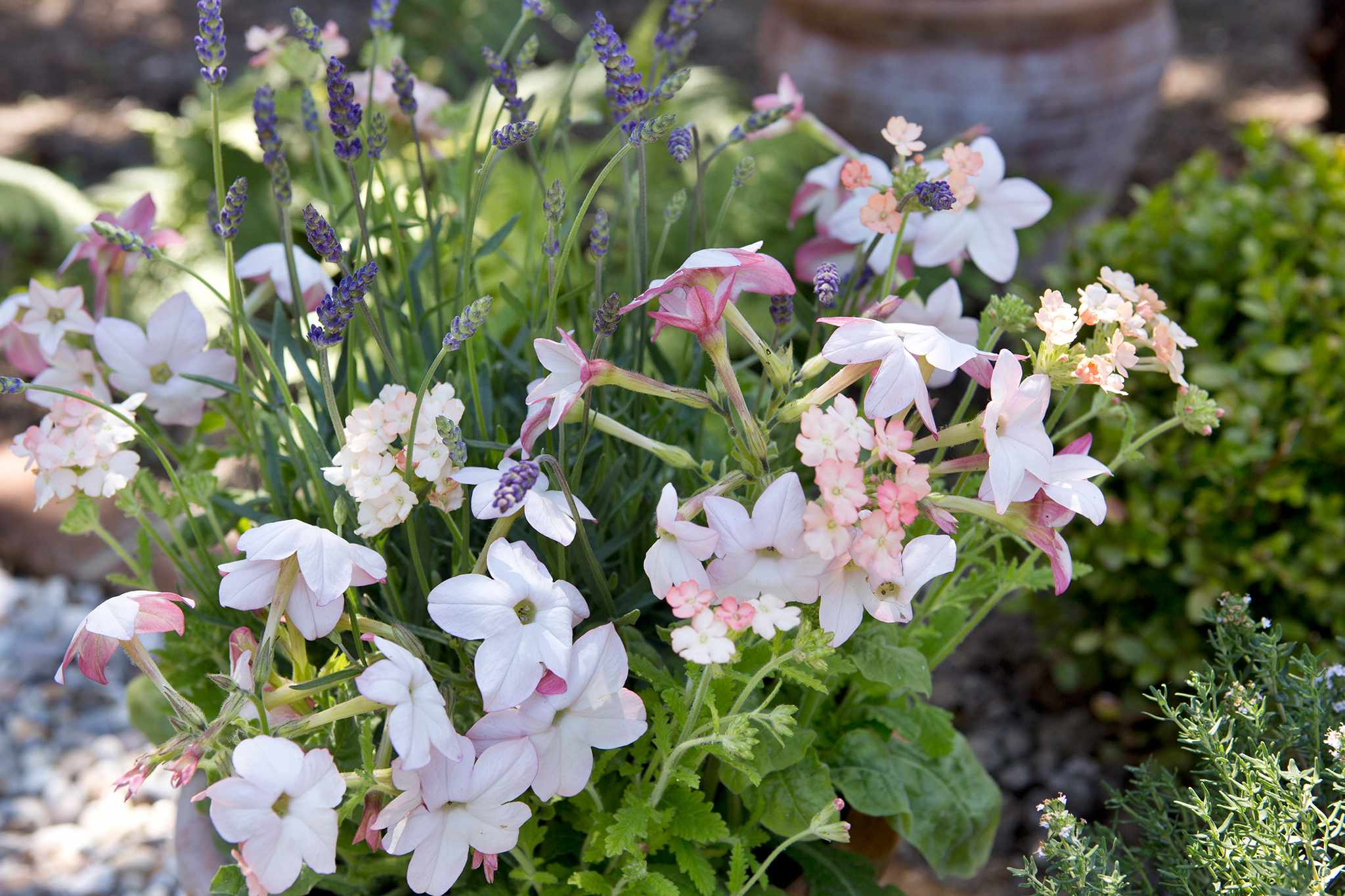 How to grow summer bedding