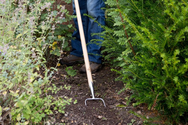 Removing weeds by sweeping the soil surface with a Dutch hoe