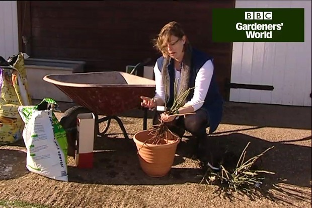 How to plant a bare-root tree or shrub in a pot