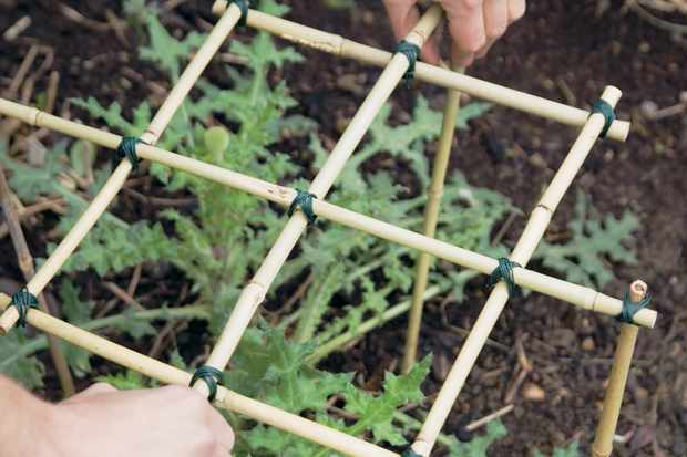 Make your own plant supports