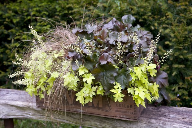 pot-for-shade-planted-with-heuchera-and-carex-2