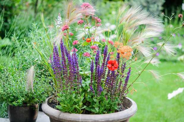Meadow plant pot display