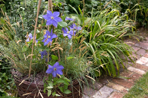 clematis-and-koeleria-container-2
