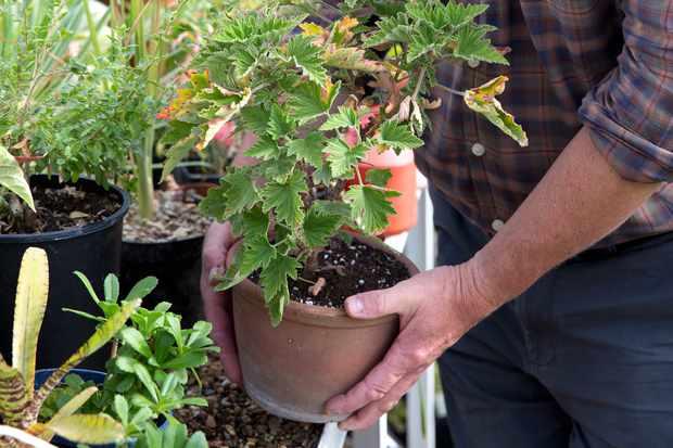 moving-houseplants-3