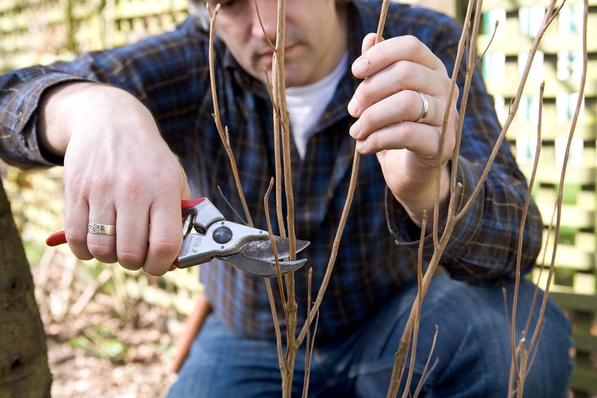 Pruning a new shrub