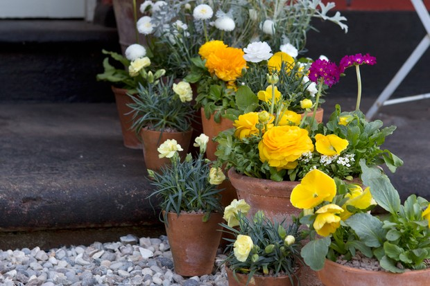 a-colourful-collection-of-container-grown-plants-2