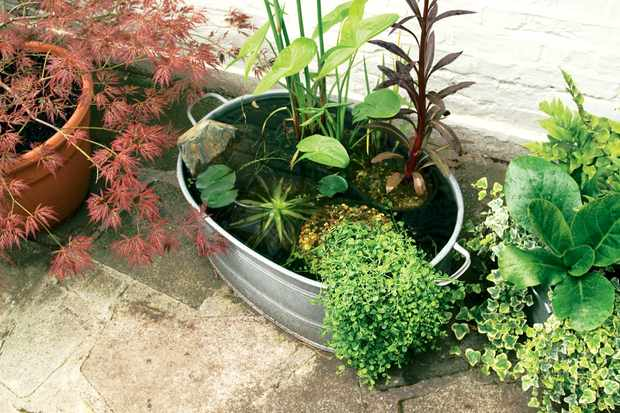 How to make a mini-pond
