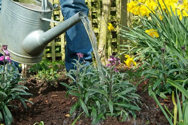 get-the-best-from-alkaline-soil-mulch-4