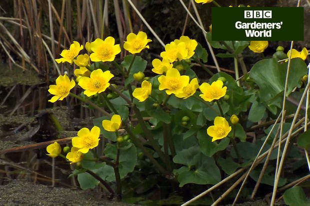 How to create a wildlife garden part four video
