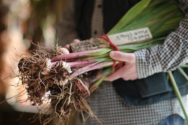 How do I grow perfect gladioli?