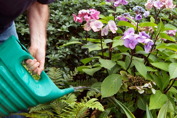 How to water your plants - watering at the base of plants