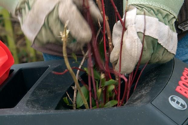 shredding-woody-stems-2