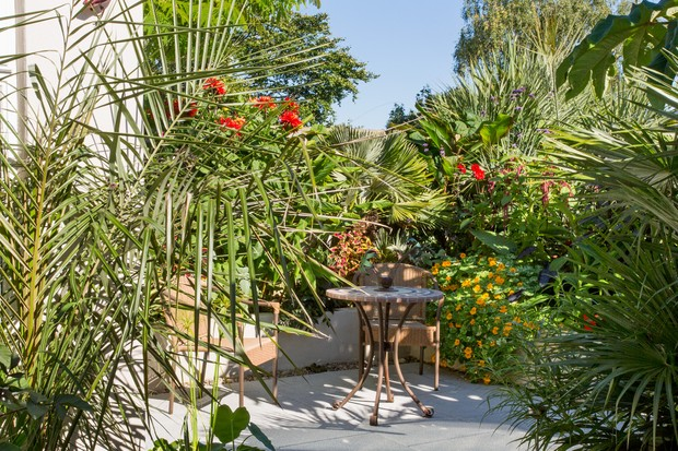 small-sheltered-garden-with-tropical-planting-3