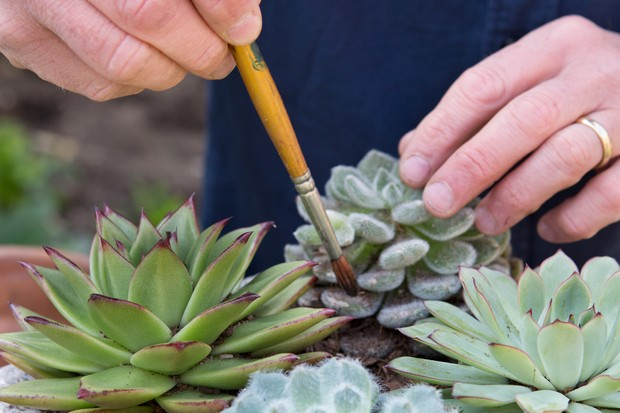 Use a soft paintbrush to keep the leaves clean