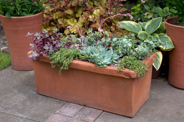 Terracotta trough container planted up with sedums and echeverias