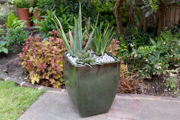 Green glazed container planted up with different aloe species