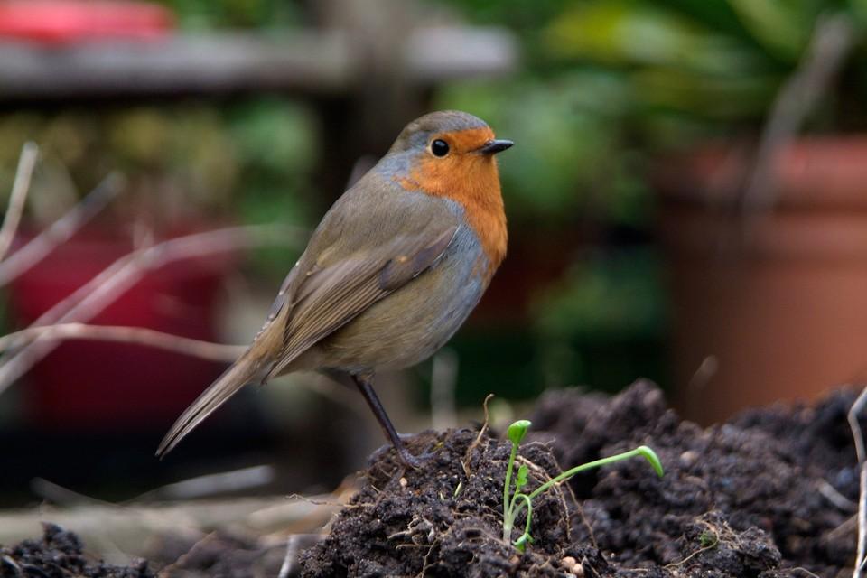 Attract Birds to Your Garden - BBC Gardeners' World Magazine