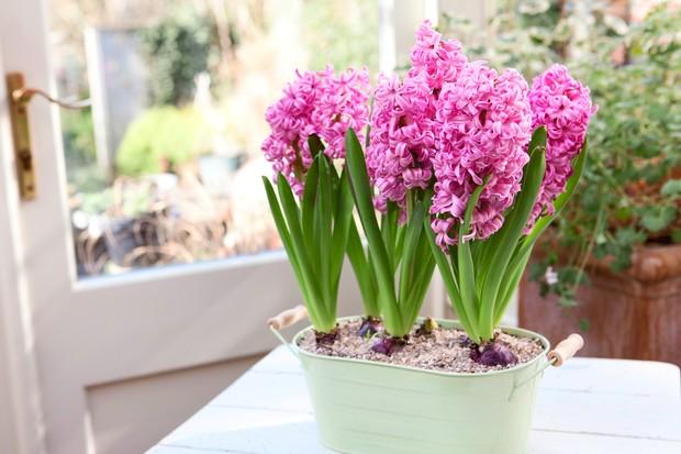 hyacinths-3