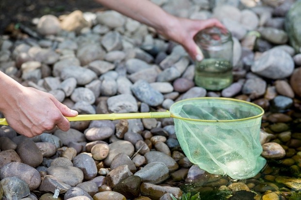 fill-a-jam-jar-with-pond-water-2