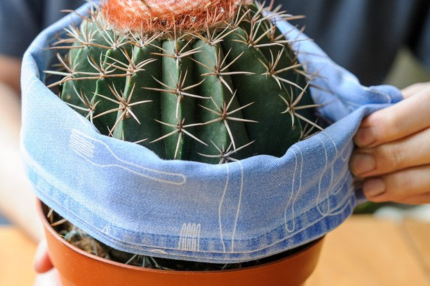 wrapping-a-cactus-in-a-tea-towel-2