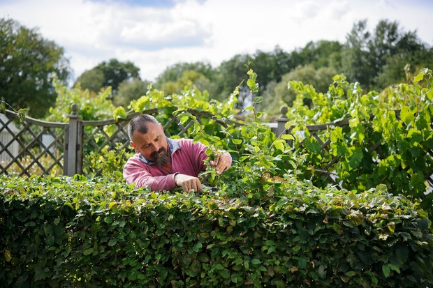 pruning-the-top-of-the-hedge-3
