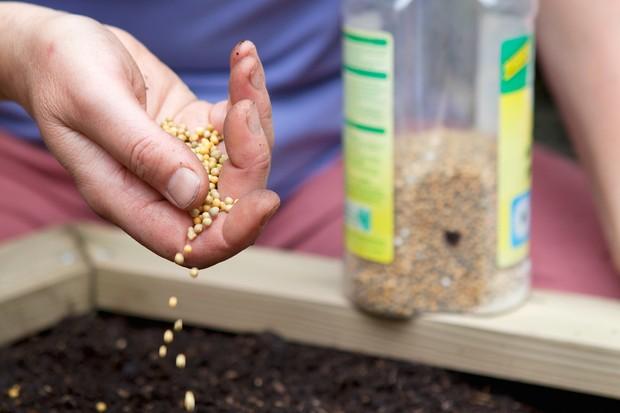 adding-slow-release-fertiliser-to-soil-2