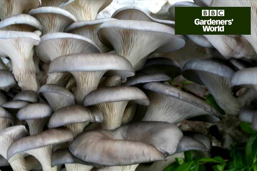 How to grow mushrooms part one video